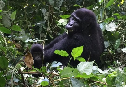 7 Days Uganda Primate Trekking Safari