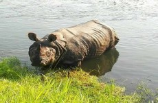 5-Day Nepal Jungle Safari Tour