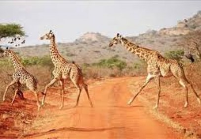 7-Day Kenya Big Five Safari Package