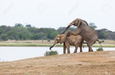 4-Day Tsavo East & West Safari