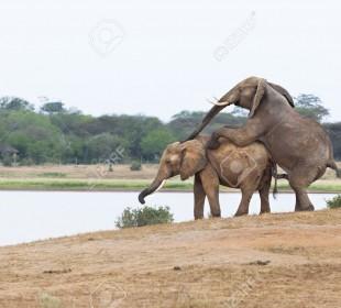 4-Day Tsavo East & West Safari
