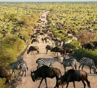 5-Day Manyara, Serengeti & Ngorongoro Safari