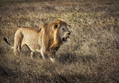 1-Day Tour to Tarangire National Park