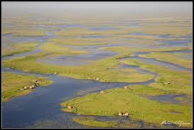 Bangweulu Wetland1
