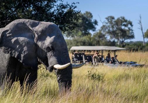 Big Elephant