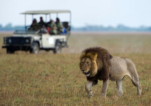 Game Drive In Kafue National Park1