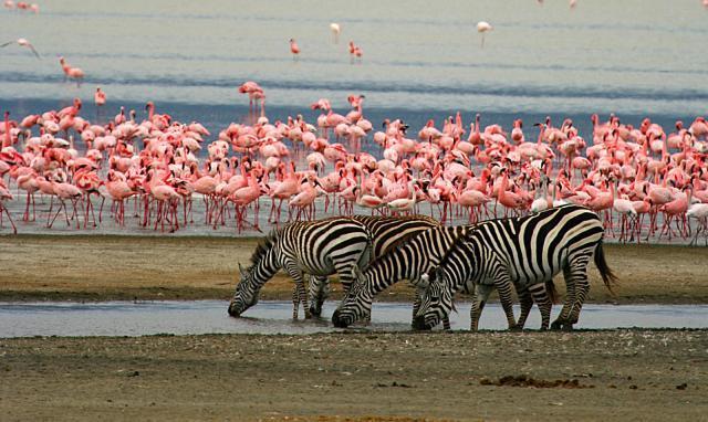 Lake Manyara 2
