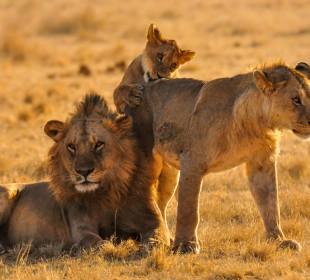 4-Day Lake Manyara, Serengeti & Ngorongoro Safari
