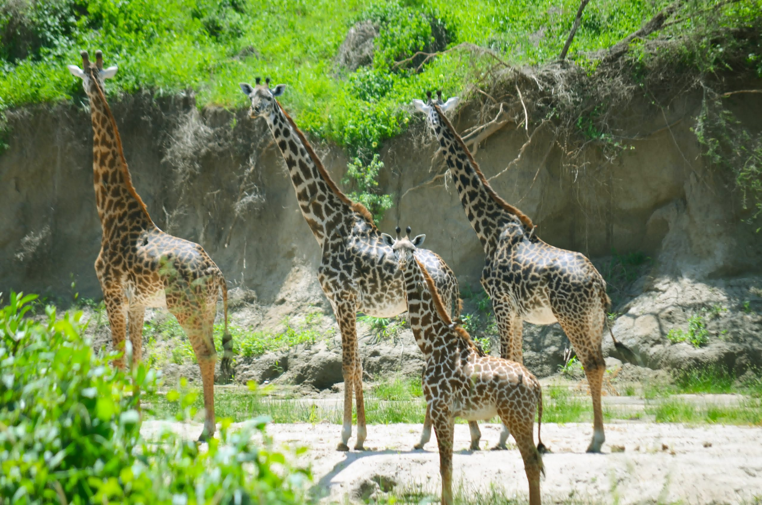 Tarangire National Park 105