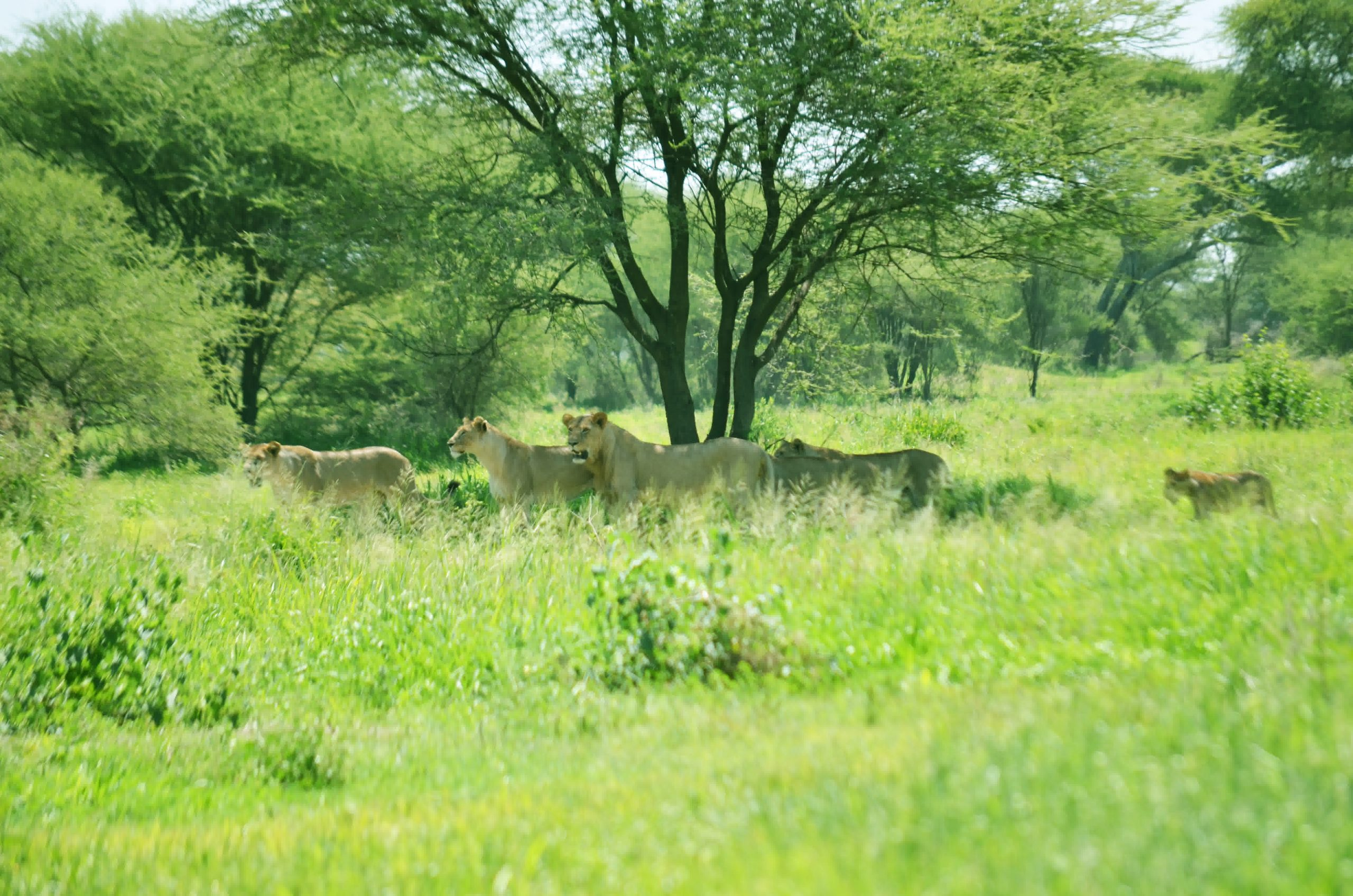 Tarangire National Park 108