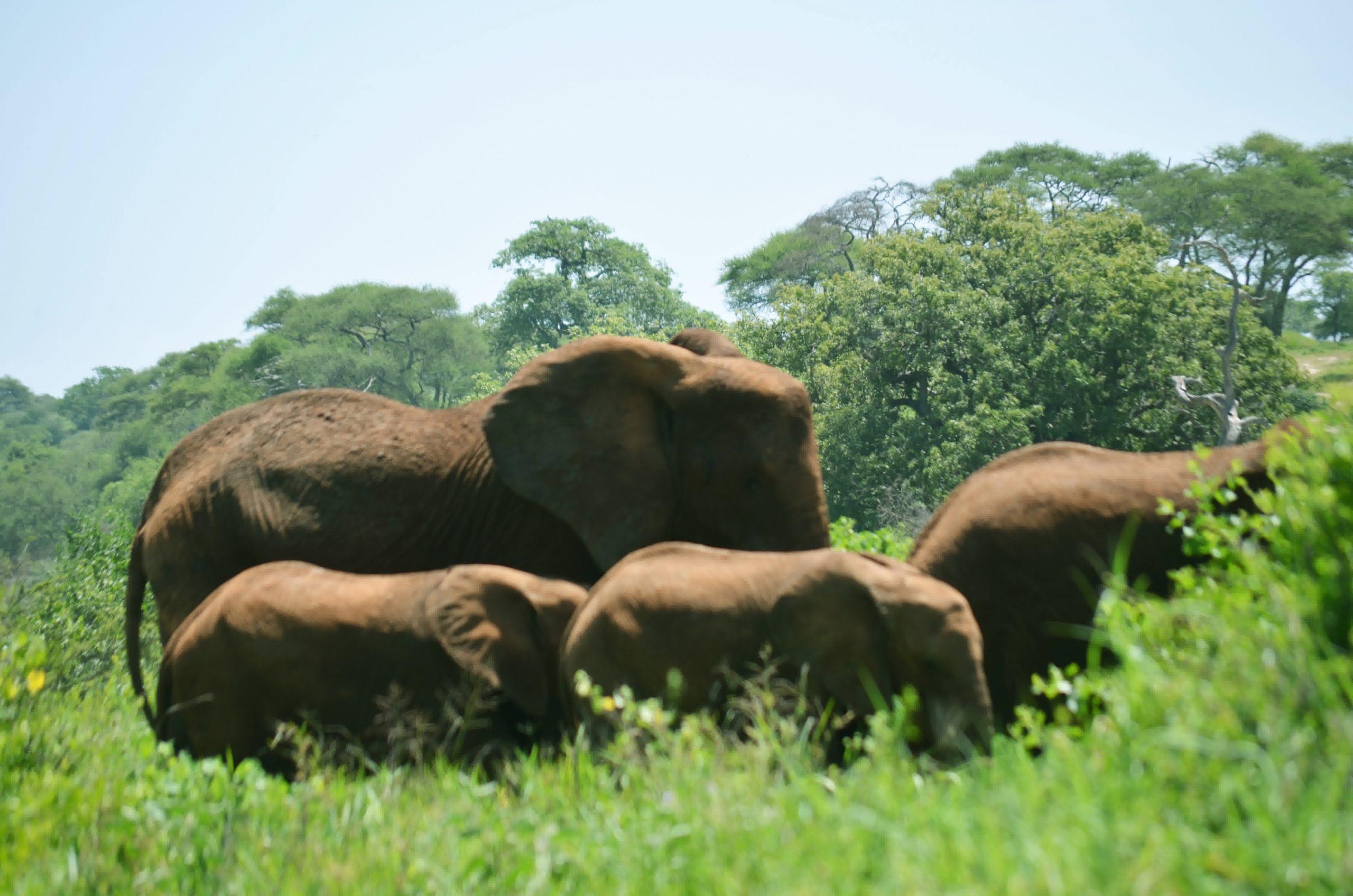Tarangire National Park 118