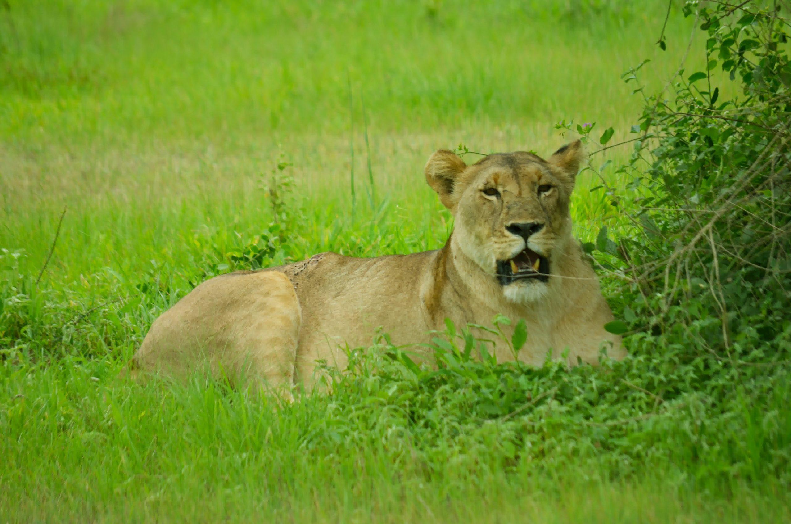 Tarangire National Park 120