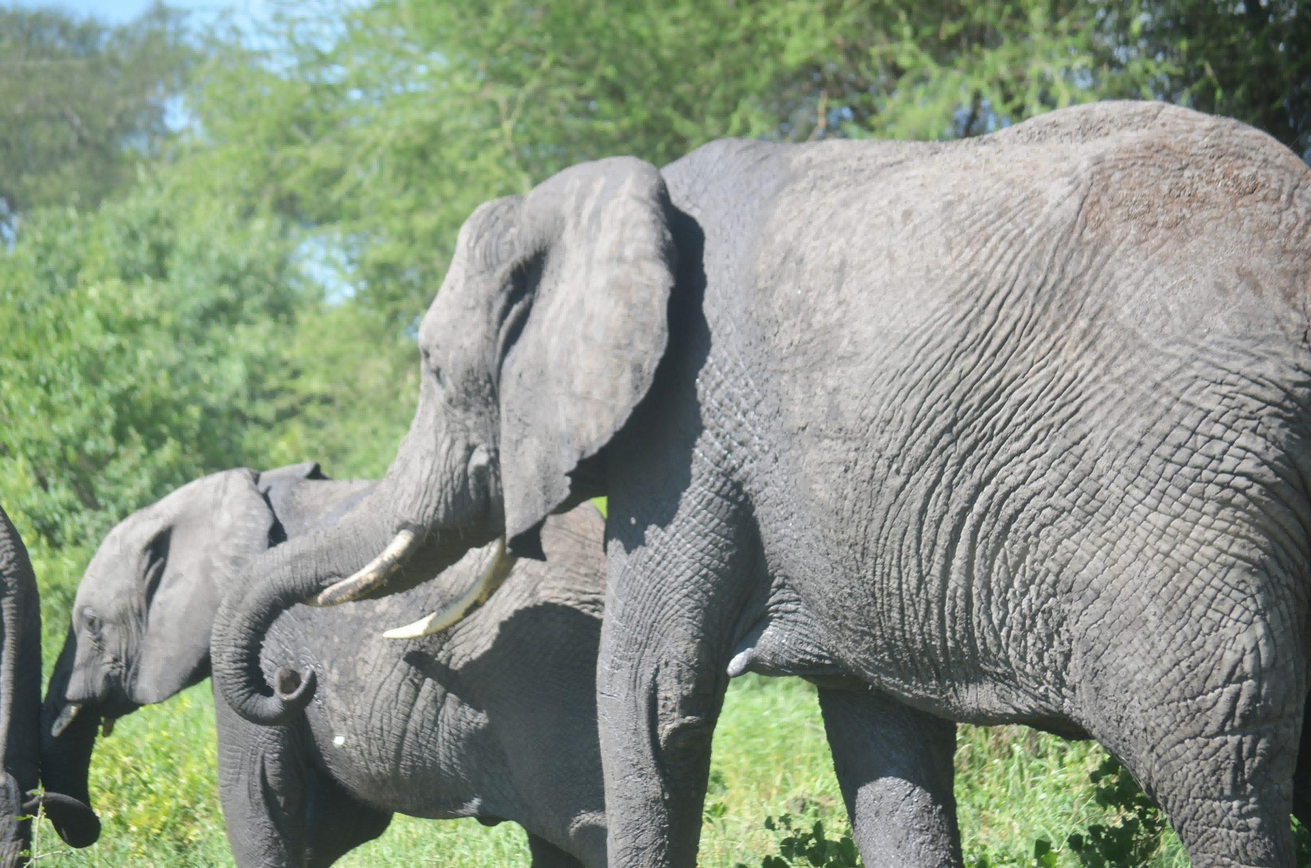 Tarangire National Park 76