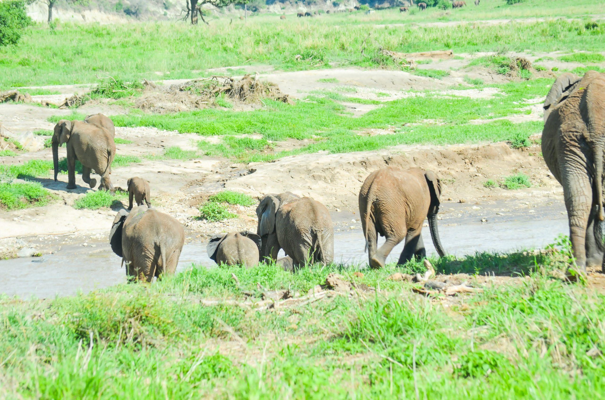 Tarangire National Park 87