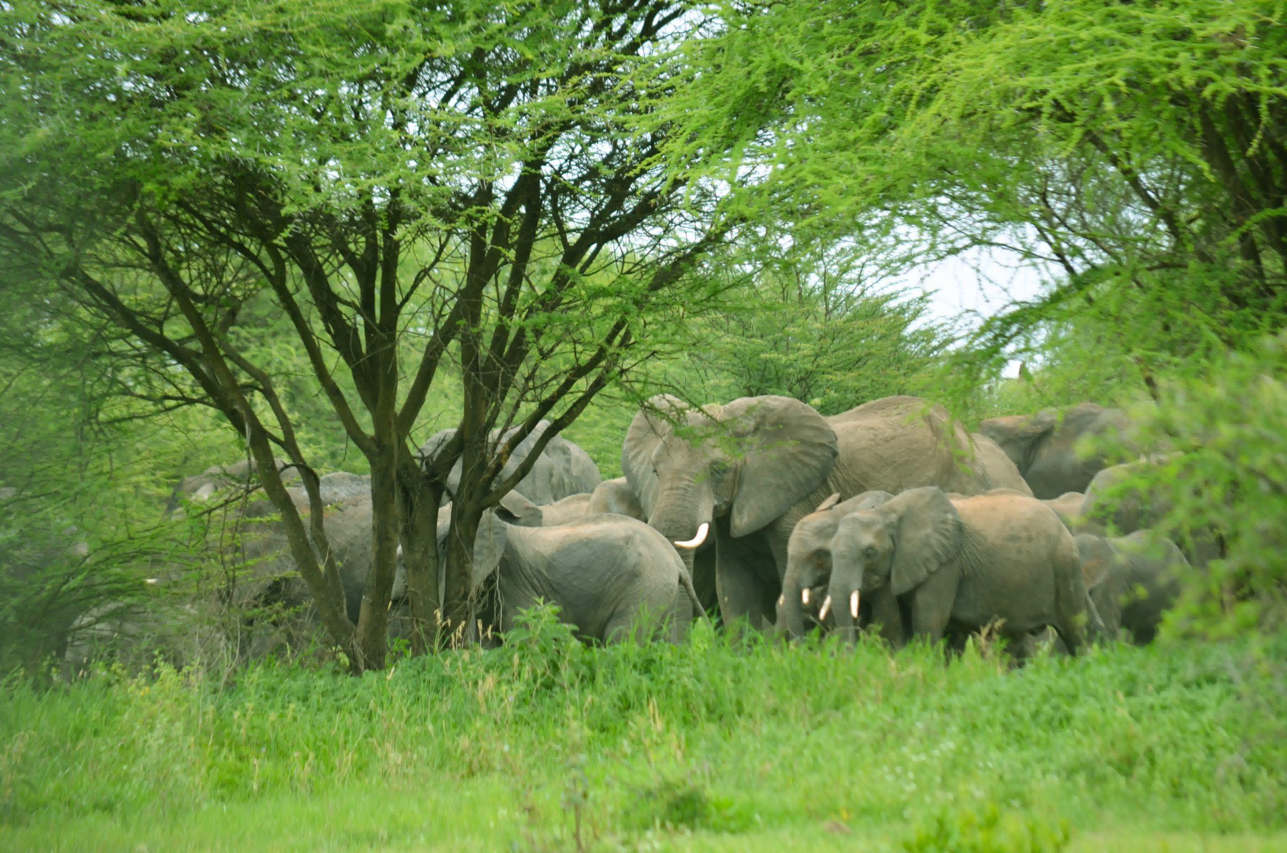 Tarangire National Park 95