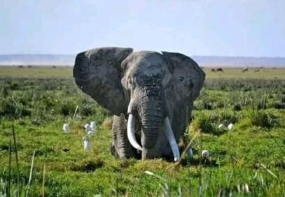 4-Day Lake Naivasha & Masai Mara Safari