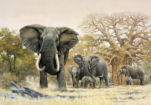 Wildlife Elephant Painting