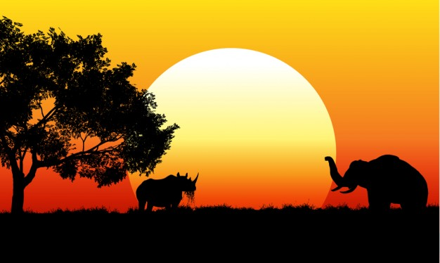 African Sunshine