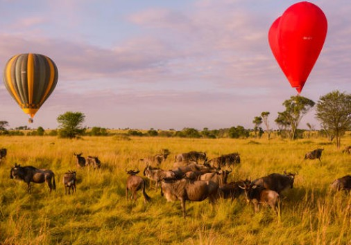 Miracle Experience Hot Air Balloons Soaring Above Serengeti