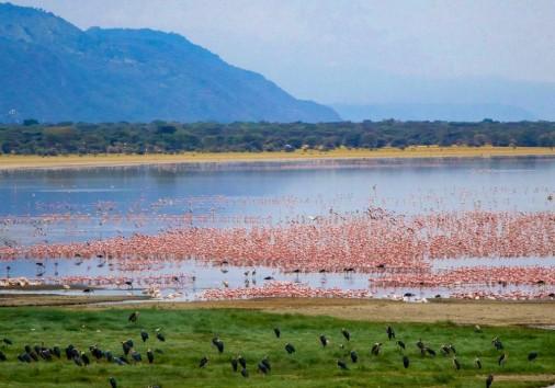 Lake Manyara 1 1110x700