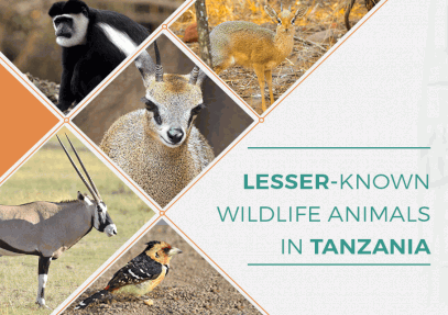 Lesser-Known Wildlife Animals in Tanzania