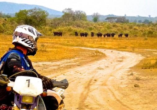 Safari Deal Send Us Tours 07