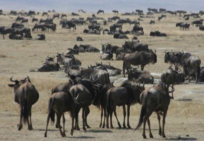 5-Day Manyara, Ngorongoro, Serengeti & Tarangire Safari