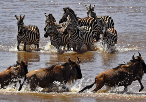 10 Day Serengeti Migration Safari