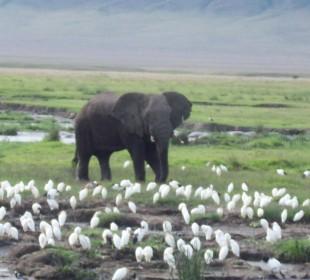 6-Day Top Tanzania Wildlife & Wildebeest Migration Safari