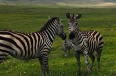 4 Days Amazing Northern Tanzania Safari