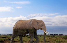 14 Days Kenya & Tanzania Safari