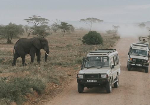 Elephant And Safari Vehicles Masai Mara Aleksandar Jason