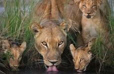 3 Days Safari in Serengeti & Ngorongoro