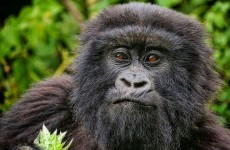 Rwanda Once-in-a-Lifetime Experience