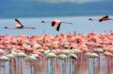 4-Day Nakuru and Masai Mara Shared Safari