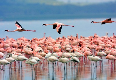 4-Day Nakuru and Masai Mara Shared Safari