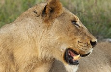 4-Day Kruger Park Fly and Drive Safari