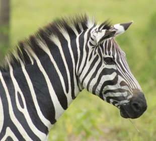 7-Day Memorable Wildlife And Cultural Encounter In Uganda