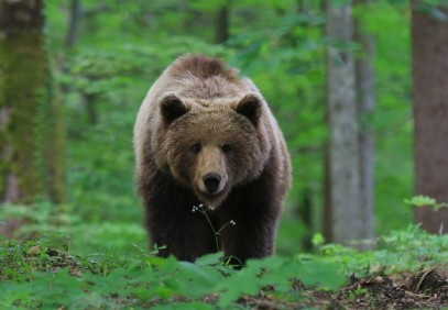 Discover the Natural Habitat of Bears