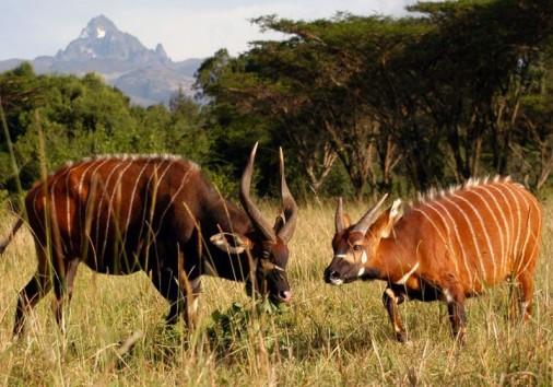 Nairobi Samburu Flight Safari