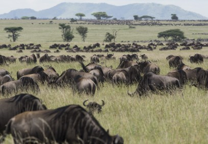 5-Day Tanzania Wildebeest Migration Safari