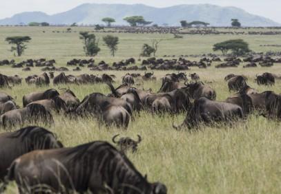 5-Day Tanzania Wildebeest Migration Safari