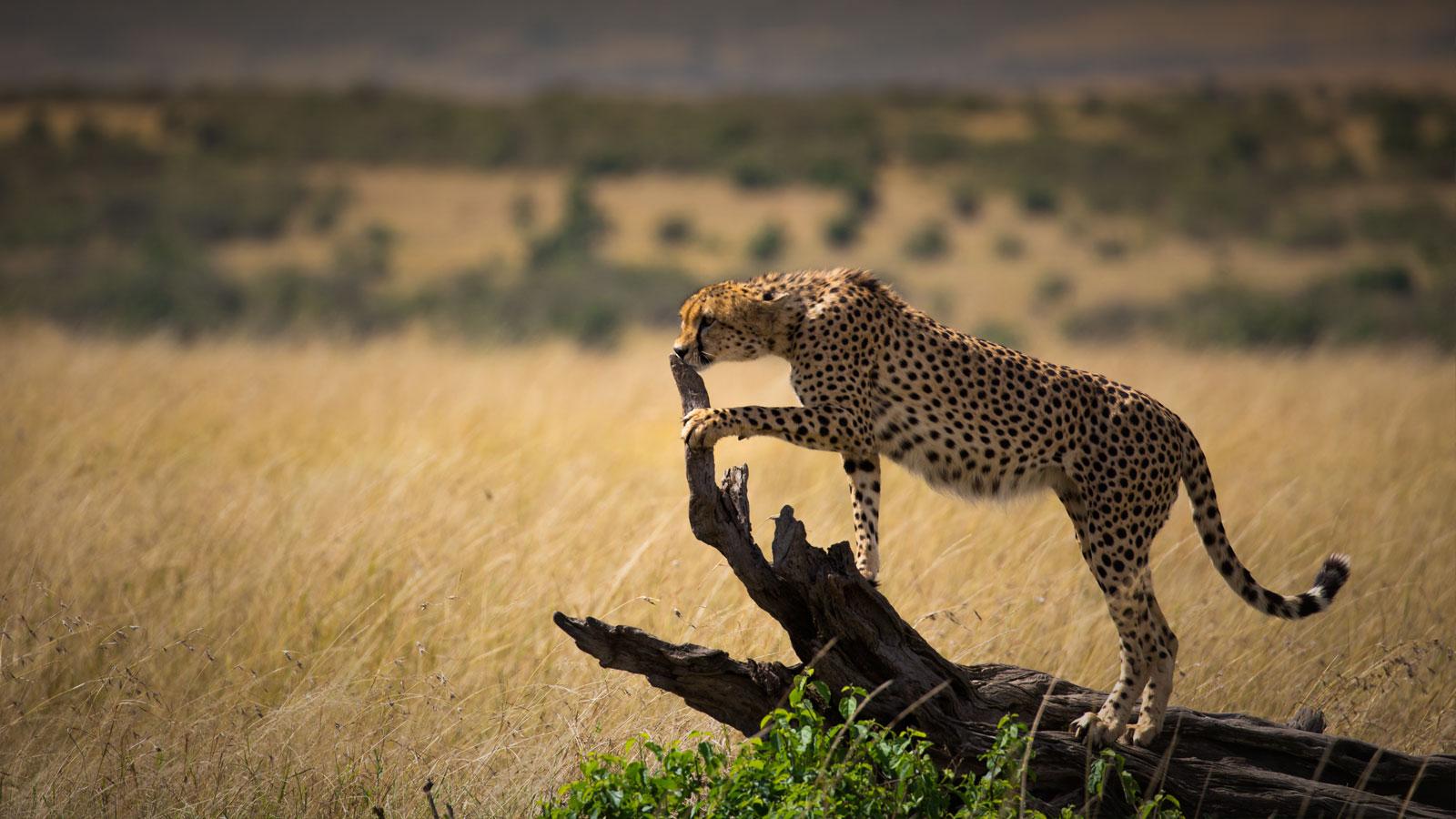 Banner Inner Masai Mara