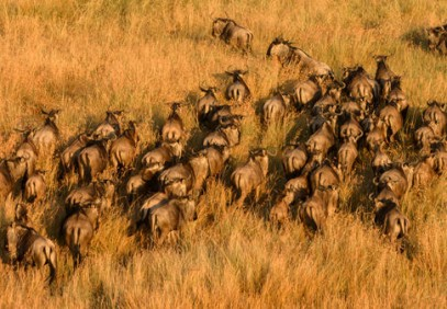 Low Season Wildebeest Migration Safari