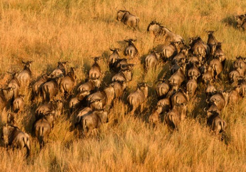 Unmatched Safari Experience