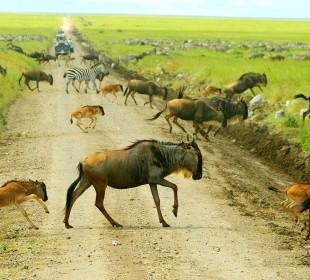8 Days Serengeti Migration Safari