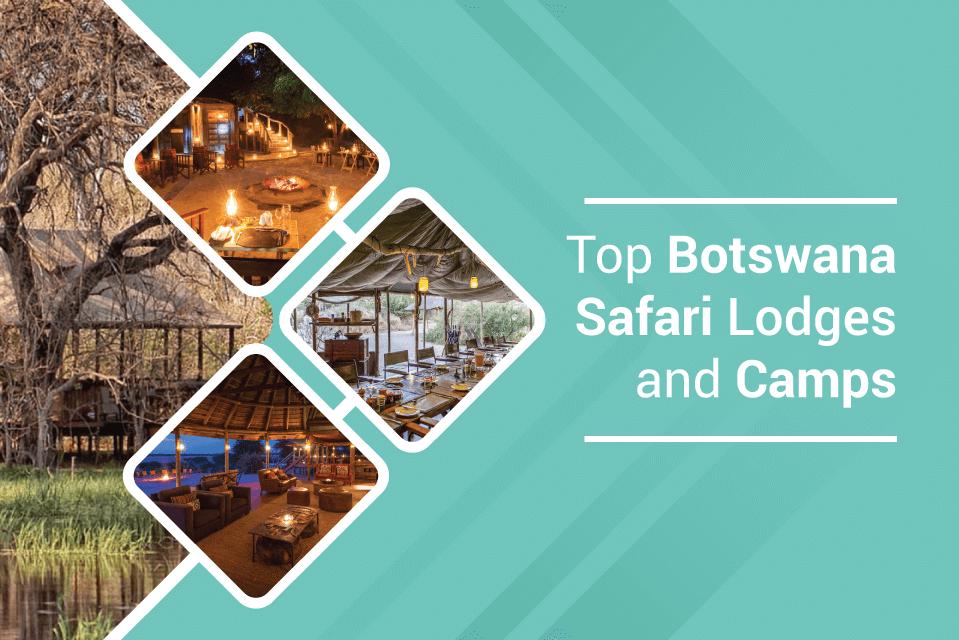 Top Botswana Safari Lodges and Camps