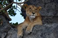5-Day Big Five Serengeti Luxury Safari