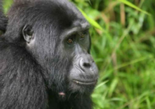 Bwindi Impenetrable Forest (6)