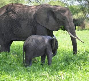 1-Day Trip to Tarangire National Park